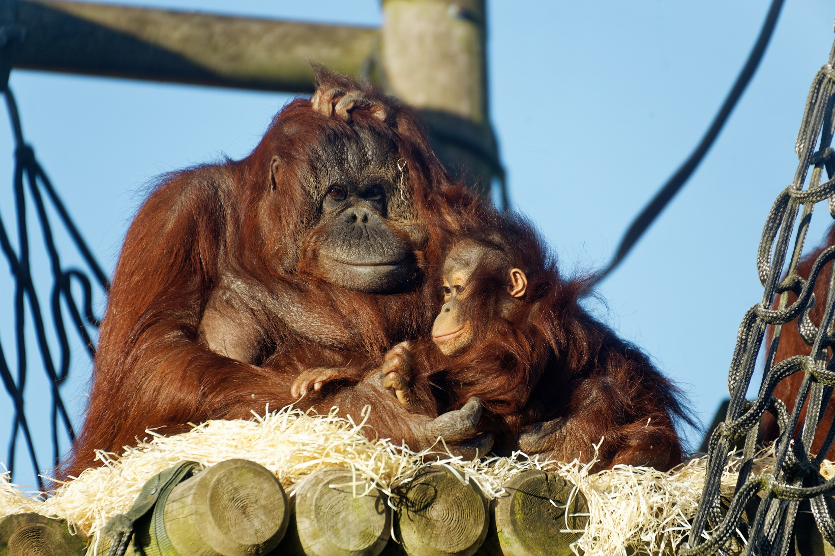 WIN AN ADVENTURE-FILLED FAMILY DAY OUT TO TWYCROSS ZOO THIS SUMMER - Derby Days Out