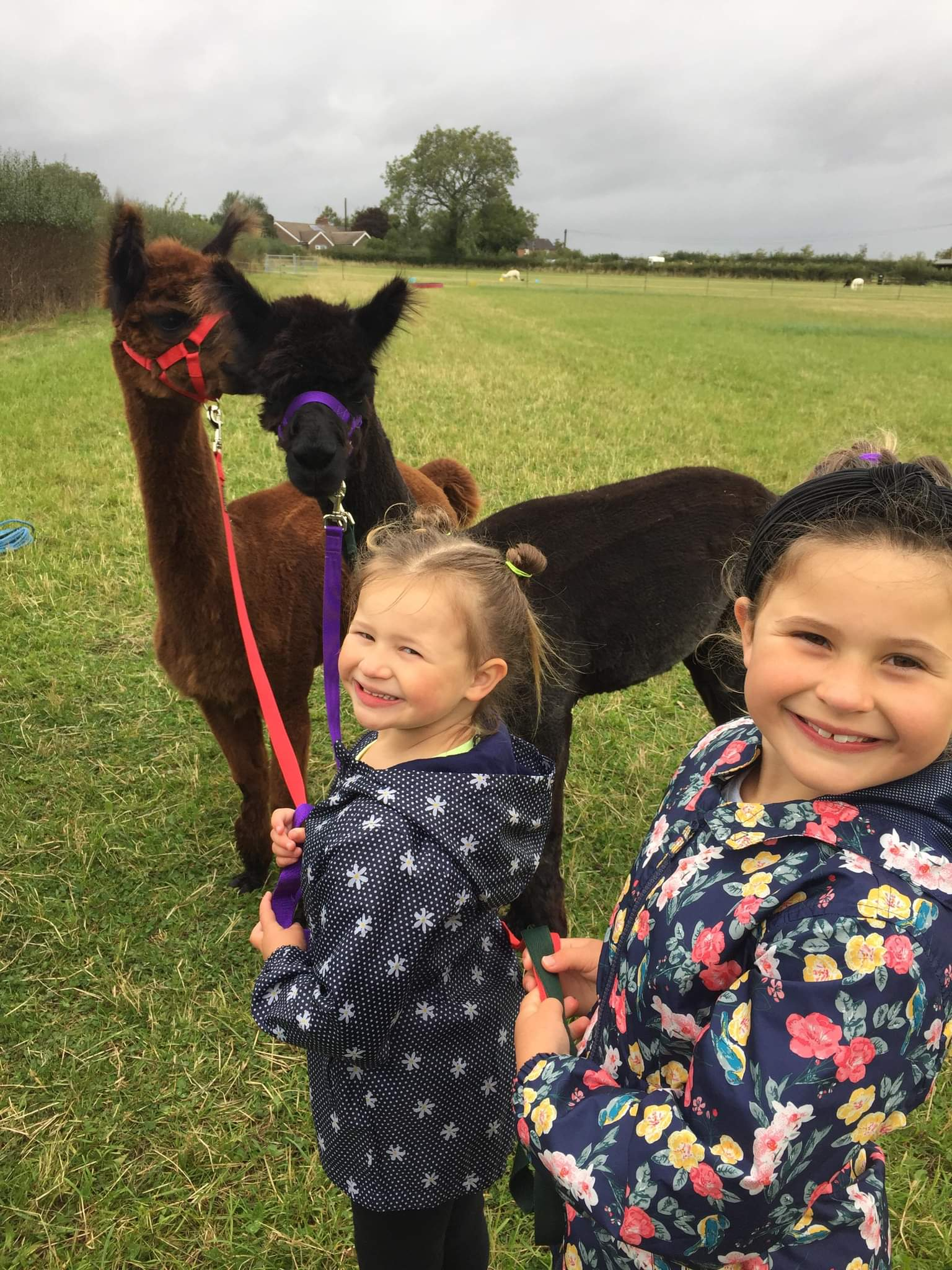 Alpaca Walking Experiences - Derby Days Out