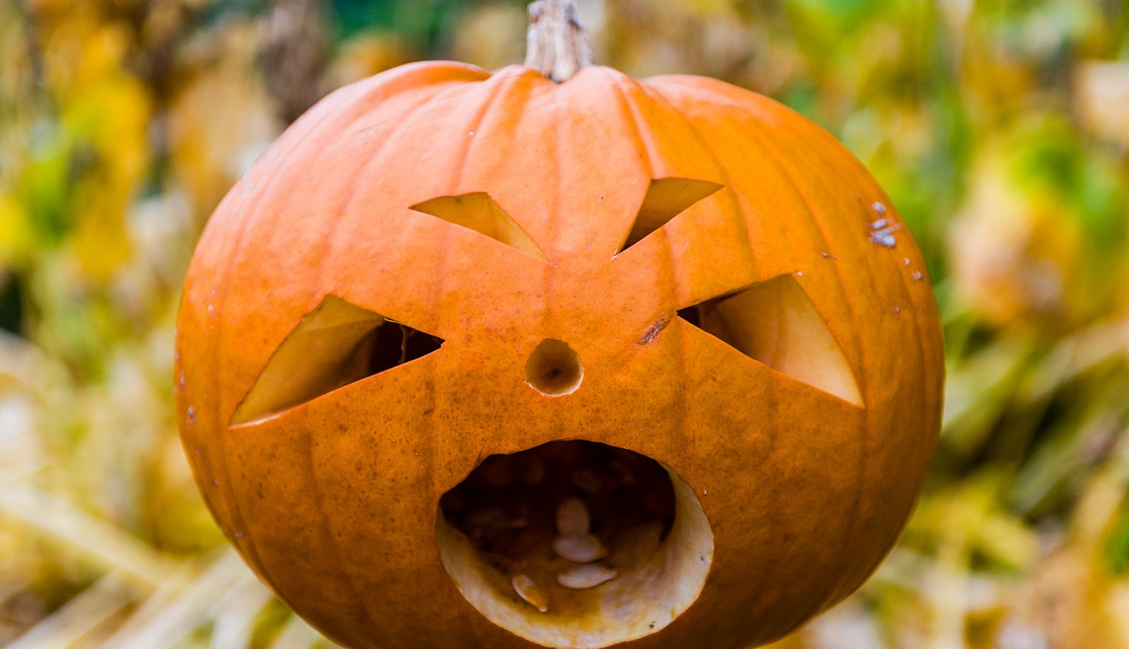 Half-term Halloween fun at Chatsworth - Derby Days Out
